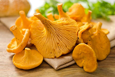 grouping: A grouping of freshly picked chanterelle mushrooms. Stock Photo
