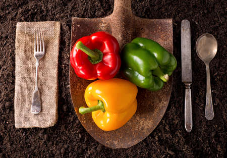 red soil: Bell peppers organic farm to table healthy eating concept on soil background.