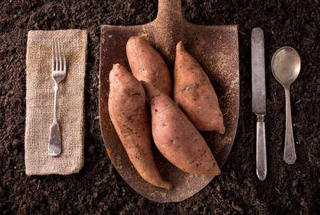 potato: Khoai lang khoai mỡ nông trại hữu cơ để bàn khái niệm ăn uống lành mạnh trên nền đất.