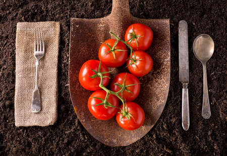 Tomatoes organic farm to table healthy eating concept on soil background.