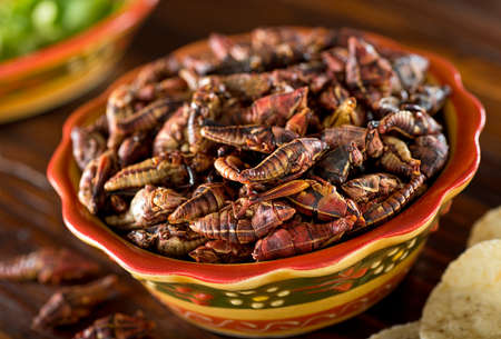 A bowl of healthy nutritious mexican grasshopper chapulines.