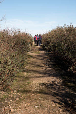 Rura hiking through the pine forest of Valsain, Segovia, Castilla y Leon, Spain, Europe