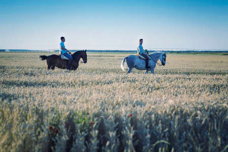 two people horseback riding through the dry cereal fields. Practicing horse riding. Stock Photo
