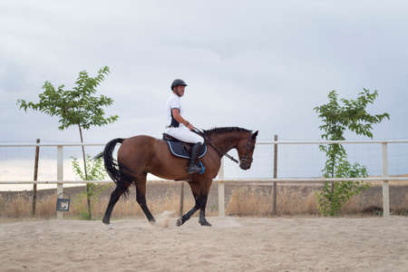 Rider riding a horse, warming up on track to exercise. Horse riding on the track.
