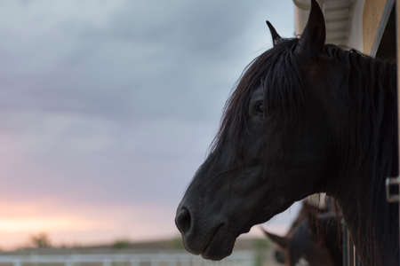 Close-up photo of black horse head at sunset.