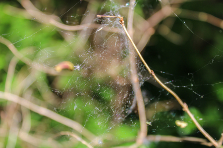 Cobweb between trunk with blured background, macro photo Stock Photo