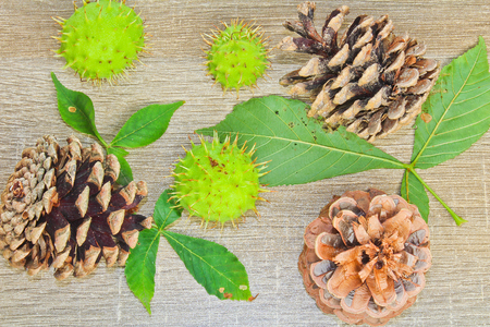 albero nocciolo: Autumn cone, chestnuts and leaves on wood background