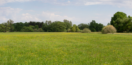 Panoramtic view to meadow with flower and big trees. Czech landscape