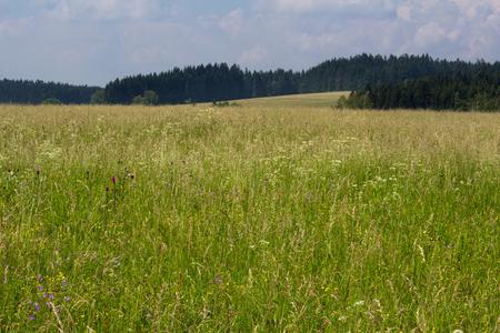 Nice Czech landscape in Novohradske mountain with meadow flower Stock Photo