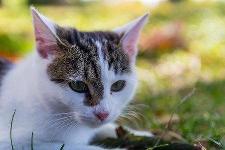 Portrait of nice small kitty cat lay in grass Foto de archivo - 133516859