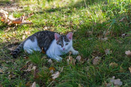 Nice small kitty cat lay in grass with autumn leaves Foto de archivo - 133516860