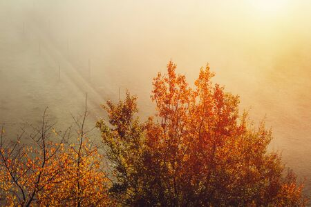 Aerial view to autumn foliage trees with misty fog and path on meadow, Czech landscape, colored photo Reklamní fotografie