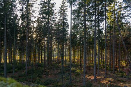 Autumn forest with sun rays, Austria landscape