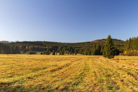 Nice autumn meadow with trees in Novohradske mountain, Czech republic Reklamní fotografie