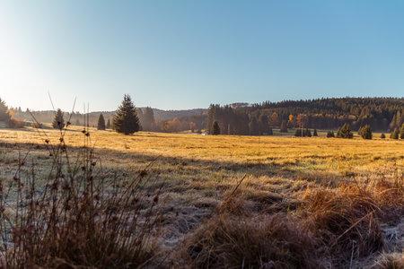 Nice autumn meadow with trees, rime and grass in Novohradske mountain, Czech republic Reklamní fotografie