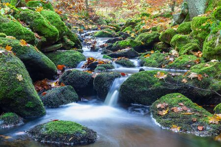 Nice small forest brook, stream with colorful autumn leaves, long exposure, Czech landscape
