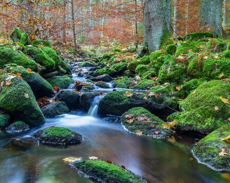 Nice small forest brook, stream with autumn leaves, long exposure, Czech landscape