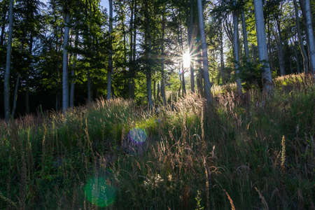 Sun rays shine through nice czech forest. Ore mountain, Czech landscape, outdoor background