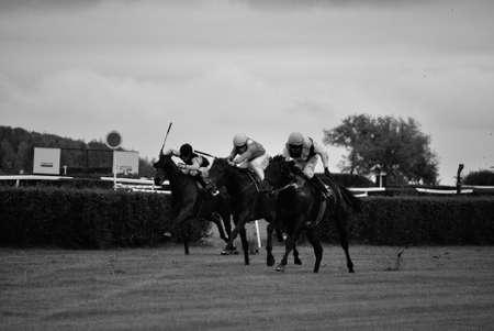 carreras de caballos: carreras de caballos