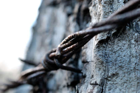 barbed: barbed wire Stock Photo