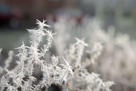 Frost Stock fotó