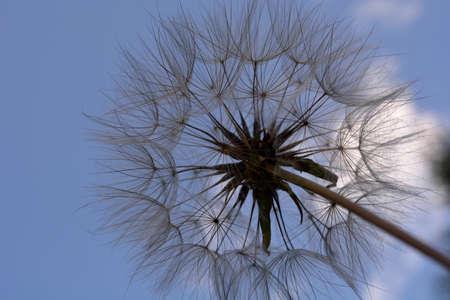 털이있는 꽃