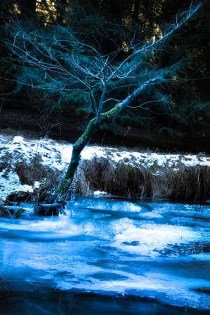 tree on a frozen stream Banco de Imagens