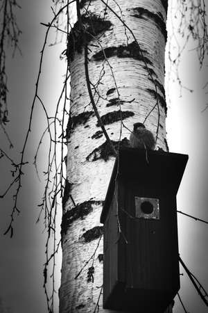 booth on the birch