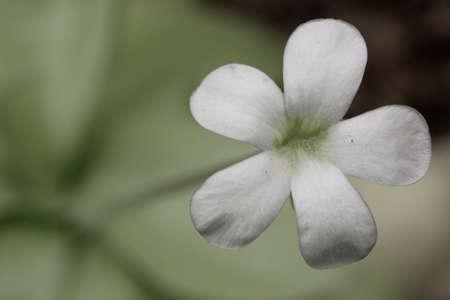 white flower closeup photo