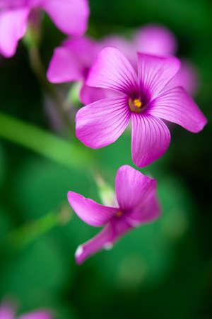 flower close up Banco de Imagens