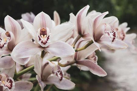 wild flower closeup photo