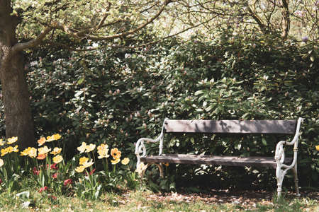 and a bench between tulips