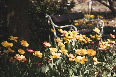 bench between tulips flowers
