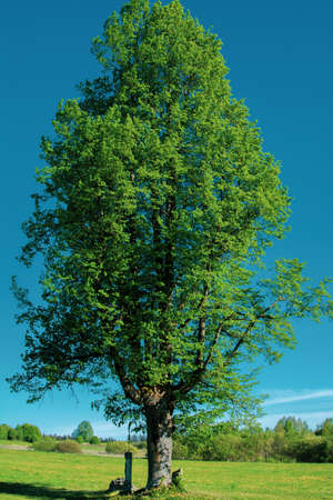 Green tree on a meadow