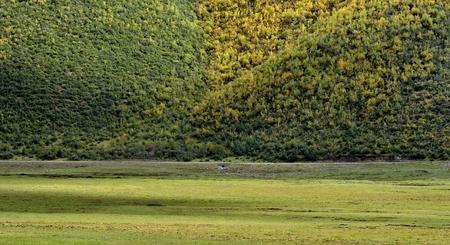 shangrila: Shangri-La grassland