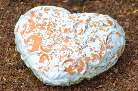 lovelorn: Heart made   of clay stone, the white color drops  Stock Photo