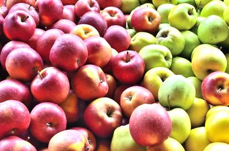 사과 수확 빨강과 녹색