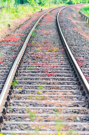 View on railroad tracks, track with a colorful plantings