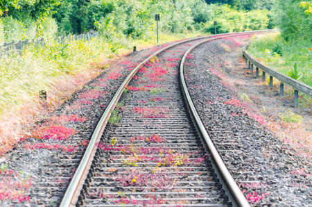 seemed: View on railroad tracks, track with a colorful plantings.