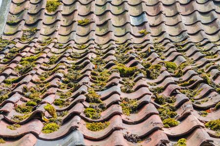 lluvia acida: Que ha sido superado Dachpfannne, ladrillo educaci�n verde y posterior oferta oferta musgo es a menudo debido a la mejora de las condiciones ambientales.