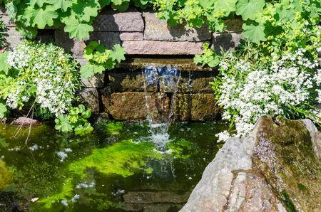 bassin jardin: Surplombant une petite cascade et �tang de jardin.