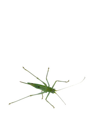 Young little insect, grasshopper photographed from below through a glass window. photo