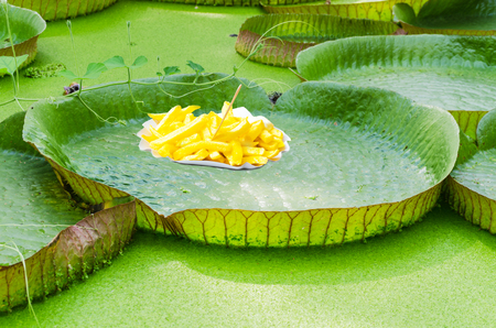 photomontage: Fun, photomontage, lily pad with french fries