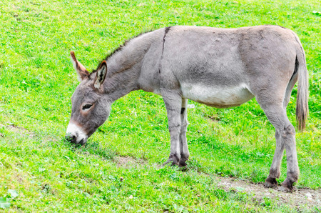 A donkey stands in the Landscape on a hillside. photo