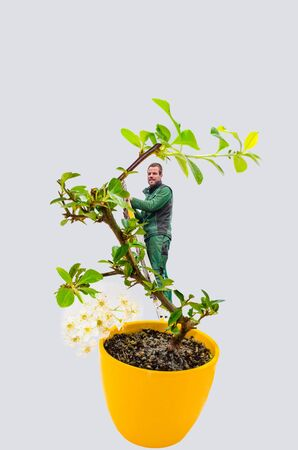 Abstract, Man with ladder in a small bonsai tree. Isolated on white background. photo