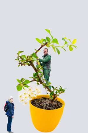 Abstract, woman and man with bonsai tree. A small bonsai tree in a yellow ceramic pot. Isolated on white background. Stock Photo