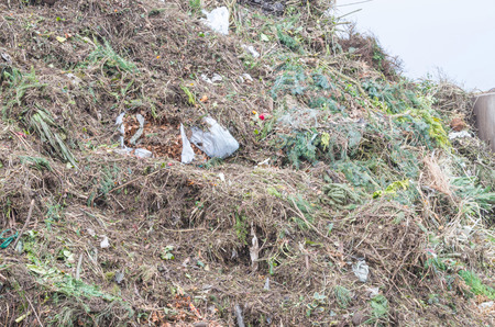 tonne: Great mountain pile of various green waste at a recycling yard. Stock Photo