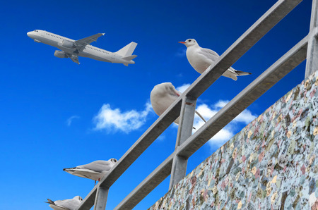 nger: Four seagulls on Gelänger on background of blue sky with clouds and an airplane.