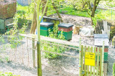 bee garden: Honigbienenstöcke im Frühling in einem kleinen Garten.  Honey bee hives in the spring in a small garden.