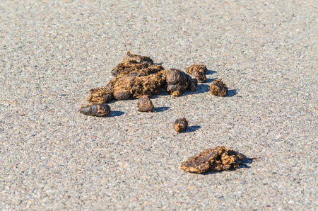 droppings: Big horse droppings on an asphalt road Stock Photo